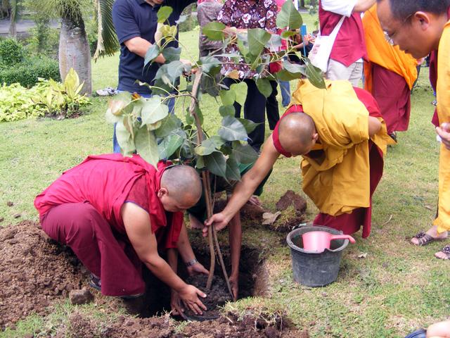 Penanaman Pohon Bodhi