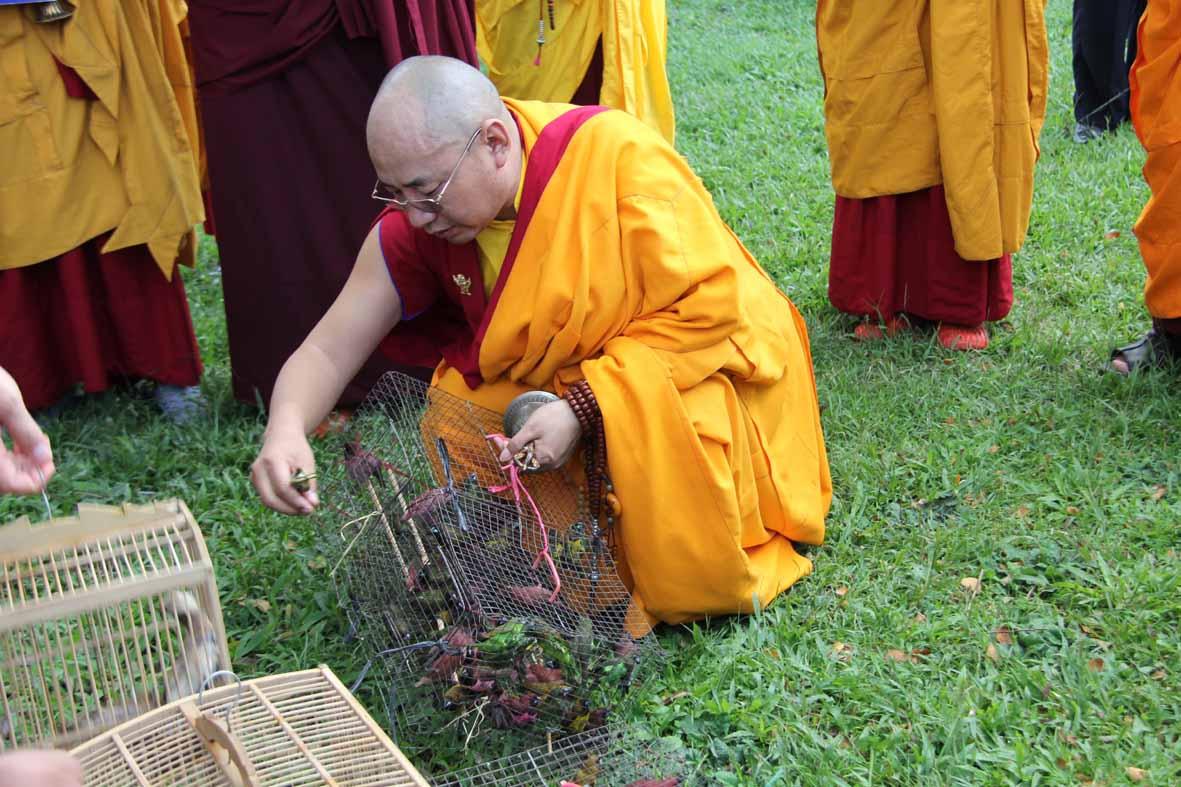 Rinpoche memberkahi dan melepas burung ke alam bebas