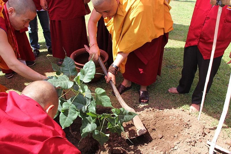 plant the Bodhi Tree